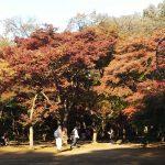 さいたま市からちょっとドライブ 紅葉狩り2 平林寺