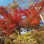 さいたま市からちょっとドライブ 紅葉狩り 栃木太平山