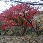 さいたま市からちょっとドライブ 紅葉狩り 嵐山渓谷